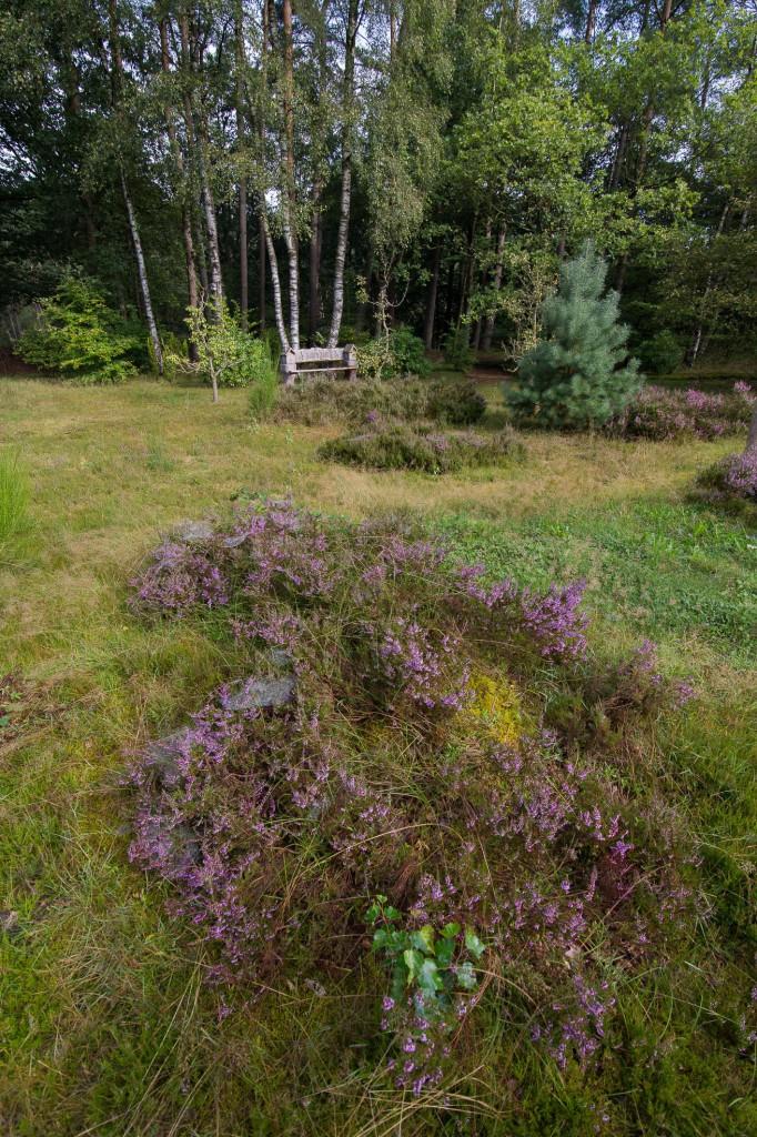 Augustus 2014, de heide in onze tuin staat in bloei