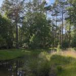 Zomer in de tuin - 12 juni 2014