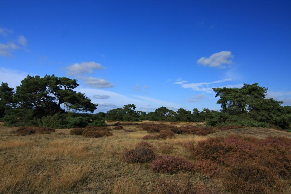 Uitgestrekte heidevelden in directe omgeving