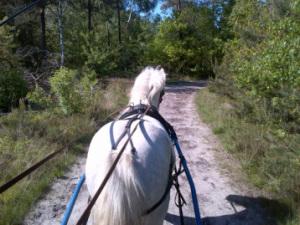 Geniet met uw paard van de Veluwe!