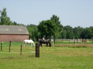 De Everketel, ideale vakantieplek voor uw paard!